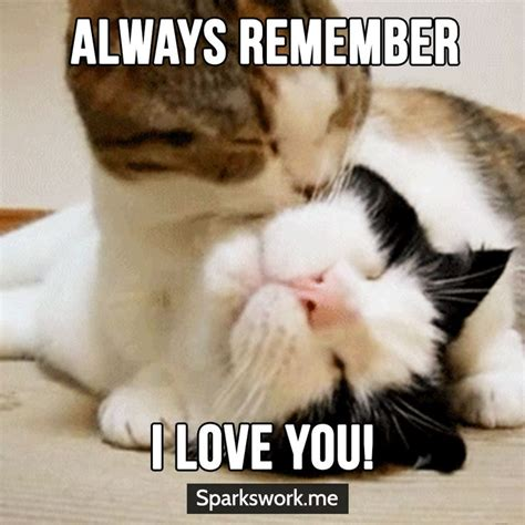 meow  love   cat memes love