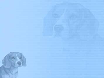 dog beagle 01 powerpoint templates