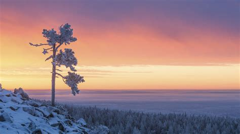 finland in december northern lights experience the northern light in the winter finland tours