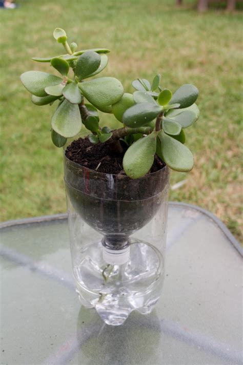Water Planter by Wick Watering For Container Plants Thriftyfun