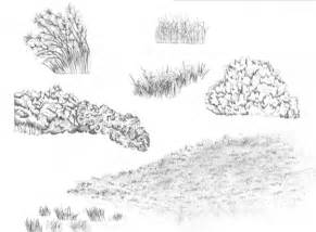 Pencil Drawing Of Tree Bushes Sketch Coloring Page sketch template
