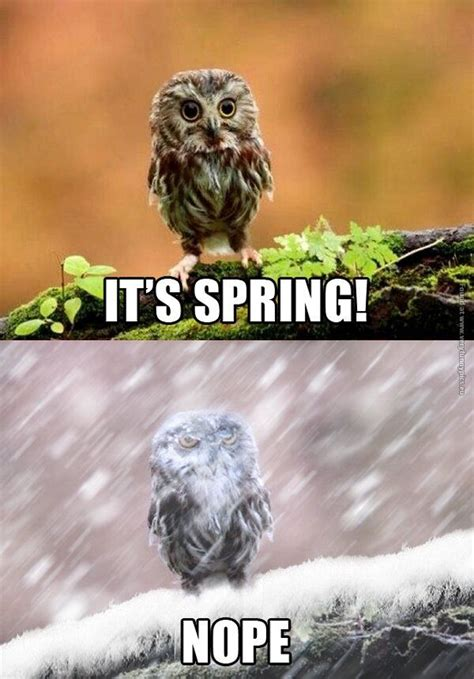 spring nope owl meme google search funny animals