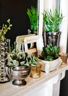 pretty indoor plants 1000 images about house plants on pinterest houseplant