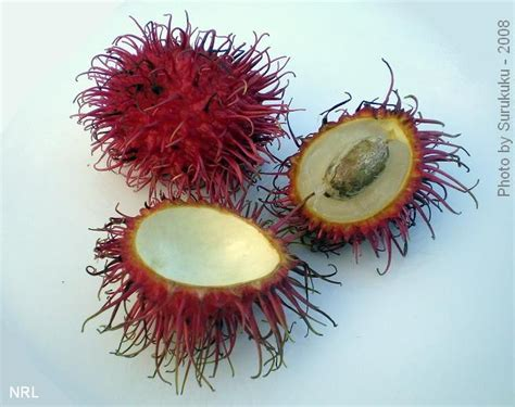 p fruits with seeds rambutan seed pods