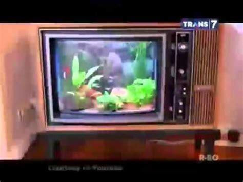 desain aquarium kura kura seni akuarium mengombinasikan ikan dan desain doovi