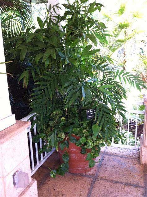 images  indoor plants  smart sixty