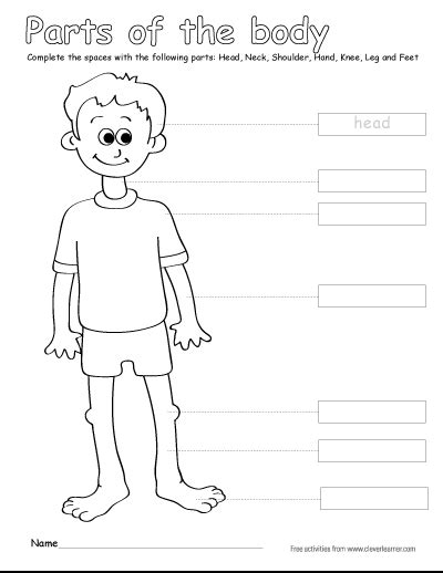 printable activities for children parts of the body label the parts of the human body free worksheets for