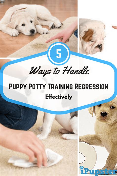 puppy potty regression how to handle puppy potty regression