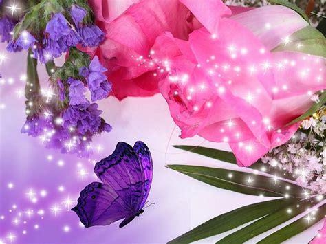 imagenes de rosas violetas rosas rosa violeta flores fondos de pantalla gratis