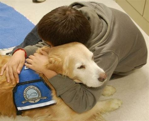 what is a comfort dog why we turn to dogs when disaster strikes mnn mother