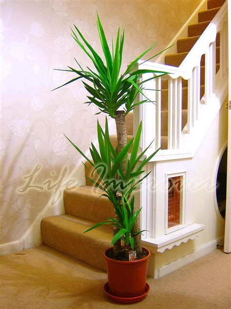inside plants indoor plants to make your house fresher theydesign net