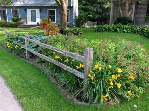 split rail fence stella d oro daylilies and spirea in the