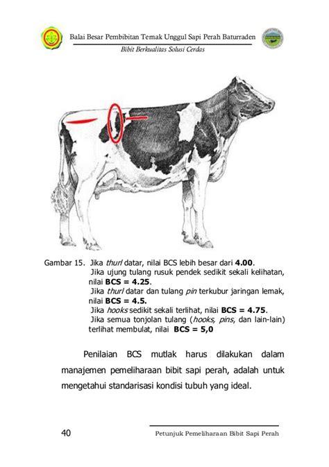 Bibit Sapi Unggul petunjuk pemeliharaan sapi perah