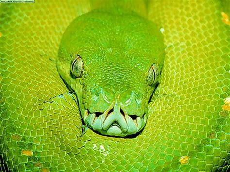 imagenes asombrosas de serpientes serpientes de todo tipo taringa