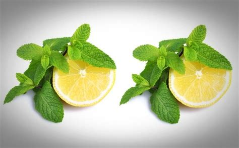 Detox Water Lemon Mint Benefits by Detox Water Recipes For Weight Loss And Skin