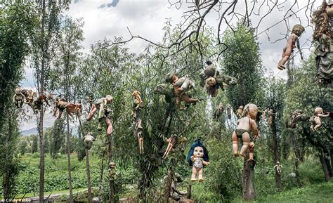 the haunted doll island mexico s island of the dolls where toys hang from tress
