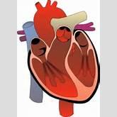 the human heart Clipart   ClipArtHut - Free Clipart