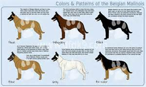 german shepherd color chart german shepherd color charts breeds picture