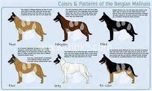 german shepherd color chart german shepherd color charts breeds picture
