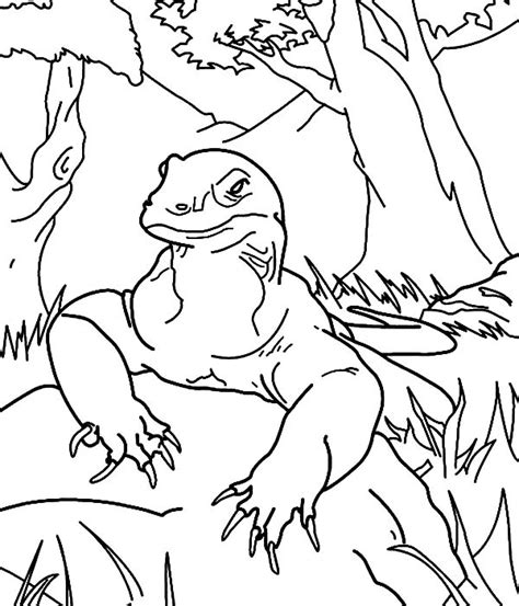 coloring page komodo top komodo taking rest coloring pages with komodo