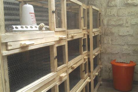 quail bird house plans  woodworking