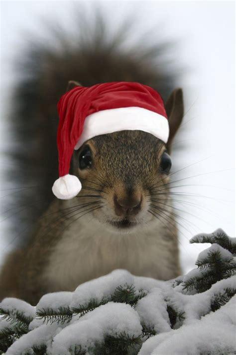 squirrels  bubba  hold  long     human put  santa hat