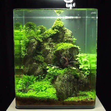 betta aquascape nano aquascaping controlled chaos pinterest editor pets and one day