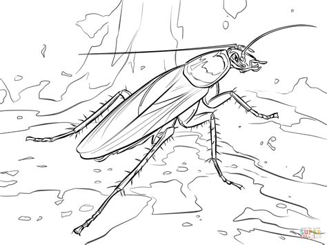 american cockroach coloring page free printable coloring