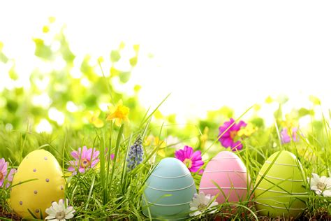 free printable easter flowers easter flower 15 background wallpaper hdflowerwallpaper com