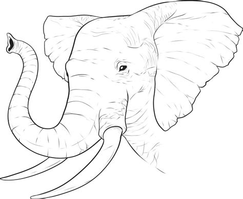 Step Outline by Free Printable Elephant Coloring Pages For