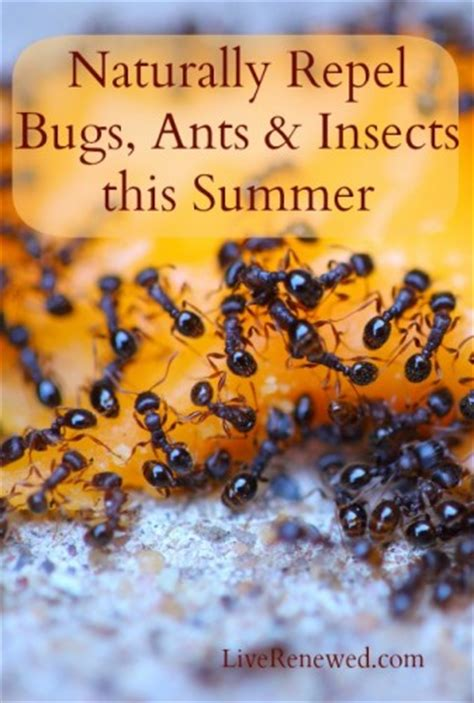 natural ways to repel bugs ants and insects this summer