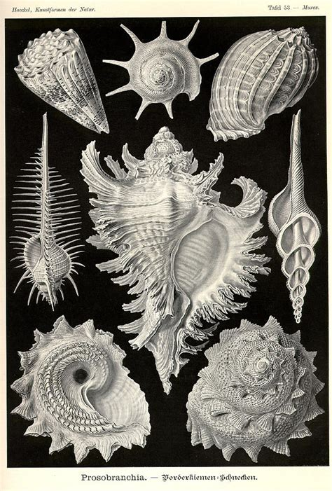 biography as an art form art forms in nature sea life painting by ernst haeckel