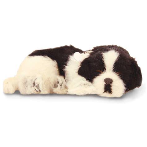petzzz puppy border collie puppy by petzzz precious petzzz