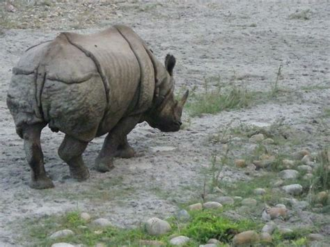 diario de  viaje  nepal  chitwan np abierto por