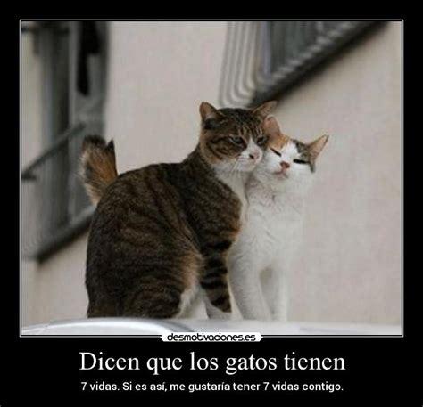 imagenes de amor con gatos imagenes de amor gatos tiernos gatitos