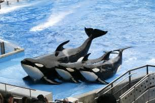 Sea World Judge Dismisses Lawsuit Brought By Seaworld Patrons