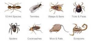 house pest common household bug identification quotes