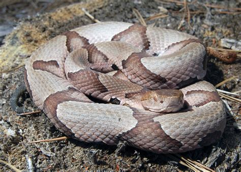 how to avoid snakes in backyard how to find snakes in your backyard 28 images how to