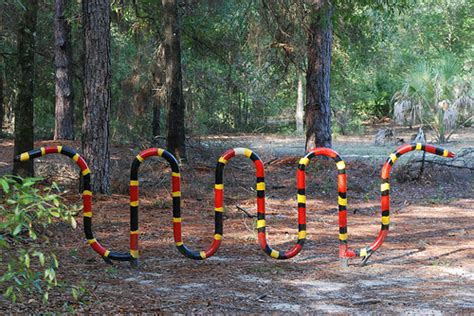 coral snake colors how to identify a coral snake florida hikes