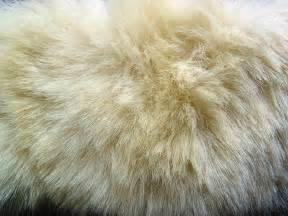 what color is polar fur skin polar 1 by arctic stock on deviantart