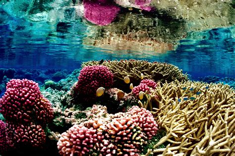 Coral Reef Research Paper by Fish Biodiversity Protects Coral Reefs Ecotone News And Views On Ecological Science