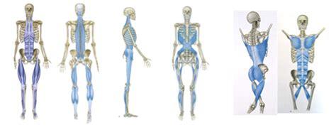 cadenas musculares mezieres pdf fascia mindful mvmnt