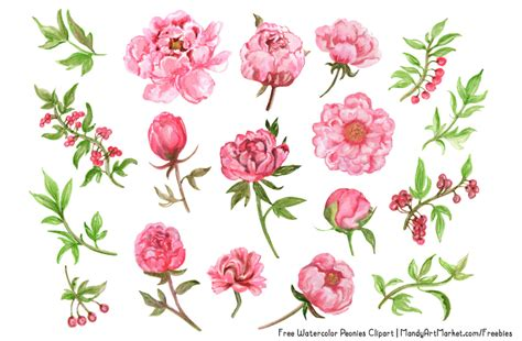 peony clipart peony clip images