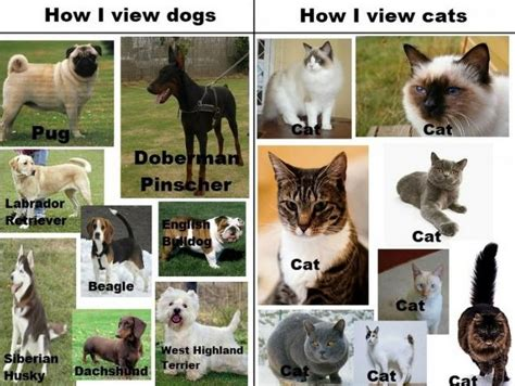 how many breeds of dogs are there cat breeds more than you might expect