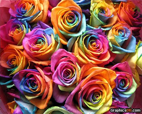 %name Knockout Roses Colors   natural: Rainbow Roses: All Colors in One Rose