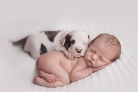 baby puppys dogs babies make the cutest napping buddies baby aspen