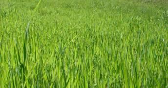 grass 171 biochemical soul