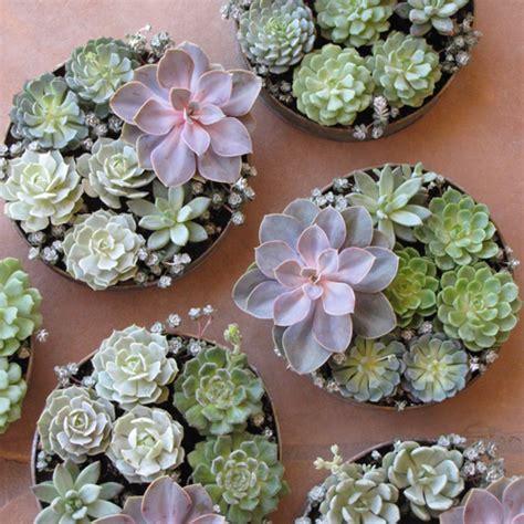 Floral Verde Llc Succulent Centerpieces Succulents For Wedding Centerpieces