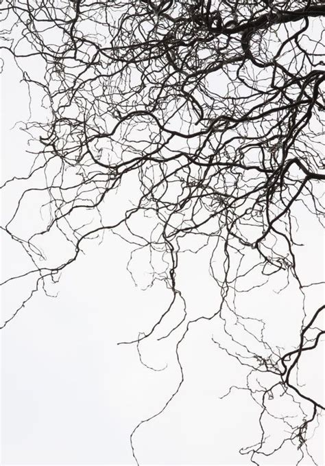 abstract tree pattern branches tree autumn nature abstract black white art
