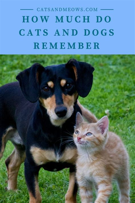 how many puppies do dogs how much do cats and dogs remember cats and meows